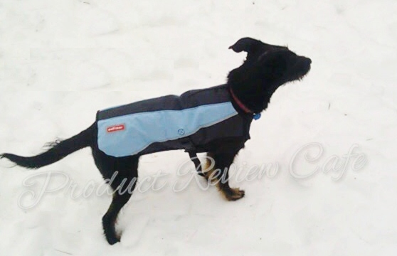 2012-13 Element Jacket From EzyDog Review And Giveaway