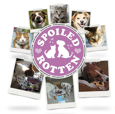PetFlow Spoiled Rotten Cat Subscription Box Product Review  Product Review Cafe 1