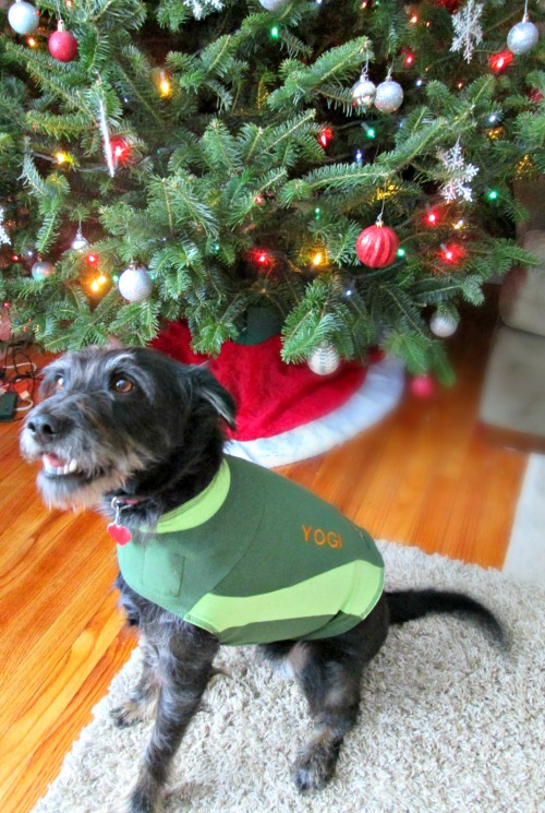 Thundershirt Holiday Colors & Custom Embroidery Product Review