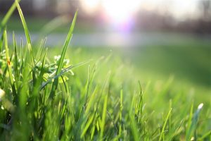 A Quick Guide On When To Fertilize Your Lawn And What To Use