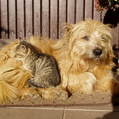 Basic Grooming Tips for Dogs and Cats