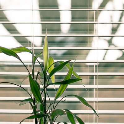 Blinds to Make Your Room Irresistible